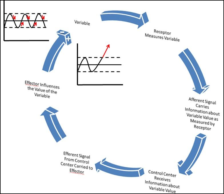 Feedback Response Loop